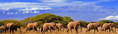 Latest Offers-africa