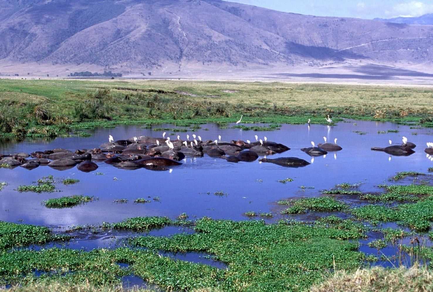 hotels in ngorongoro crater